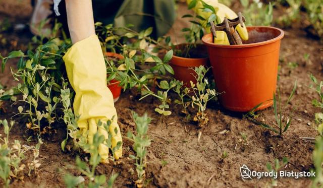Zakładanie ogrodów w Białymstoku